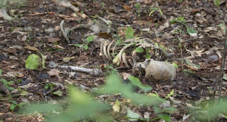 Greg Nicotero dá dicas sobre mais perigos à frente na 5ª temporada de The Walking Dead