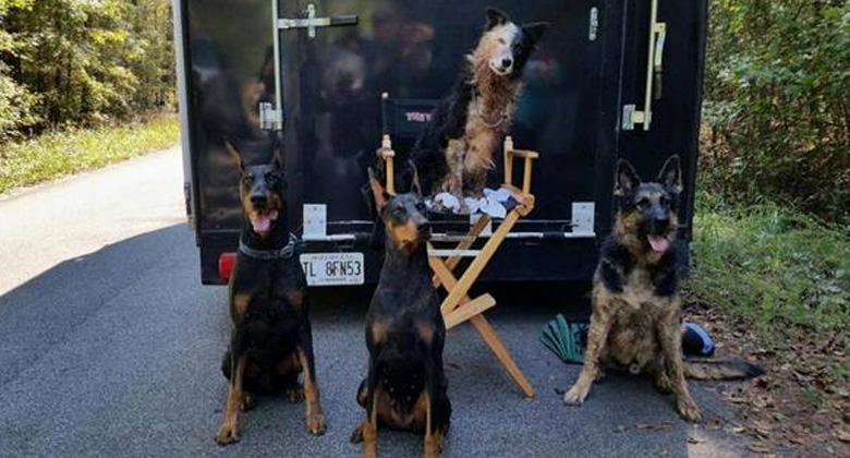 Pessoas matando e comendo cães em The Walking Dead fez o público se contorcer, mas isso foge muito da realidade?