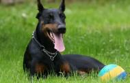 5 Boas razões para se ter um cão durante o Apocalipse Zumbi