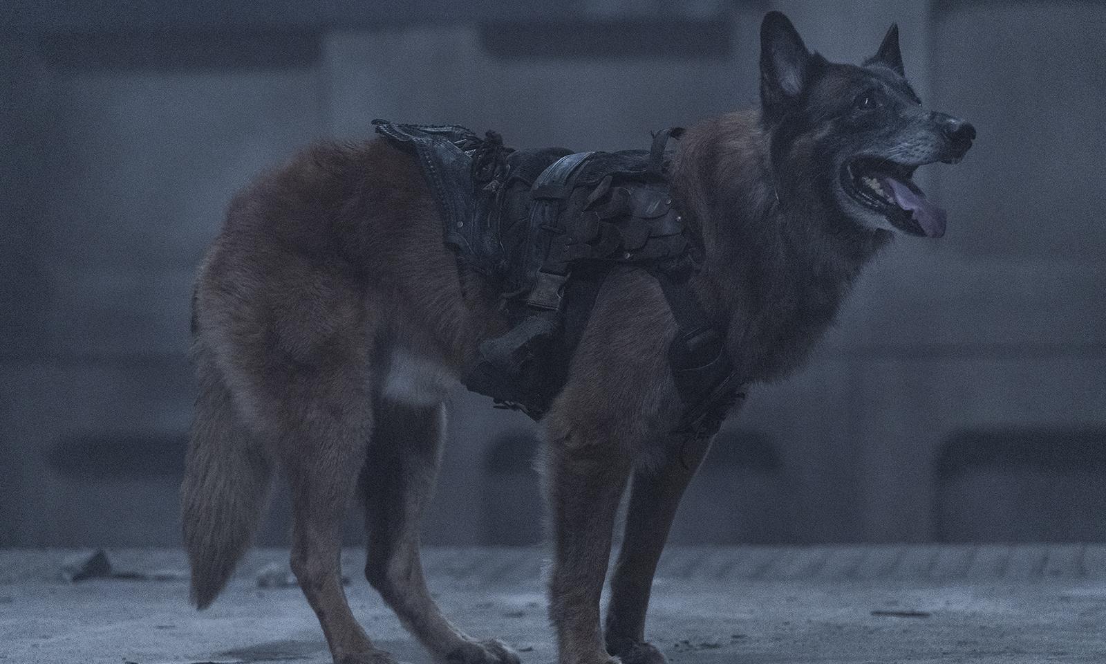 Dog (Cachorro) em imagem do episódio de estreia da 11ª e última temporada de The Walking Dead.